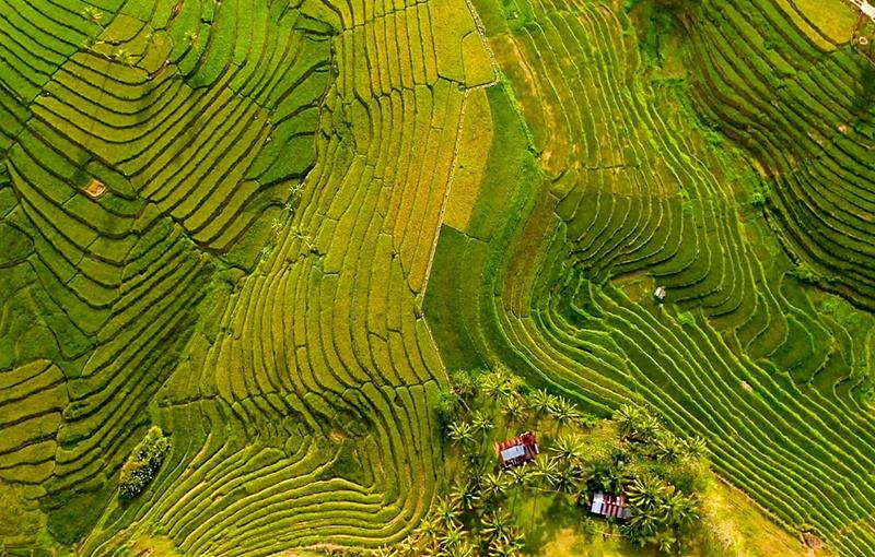 terrazas arroz Anda Bohol