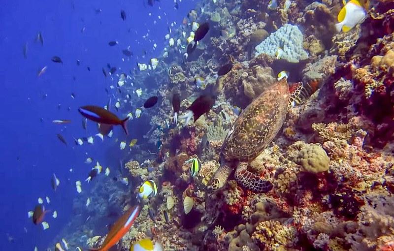 Apo reef Mindoro