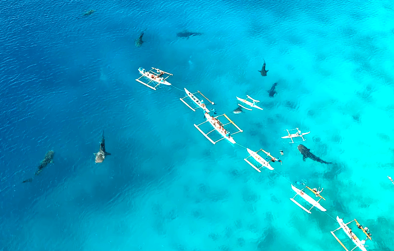 Oslob tiburón ballena